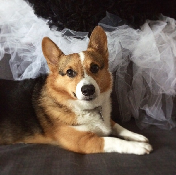 Sagan Corgipants